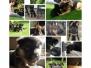 Foto's puppy's drie tot acht weken