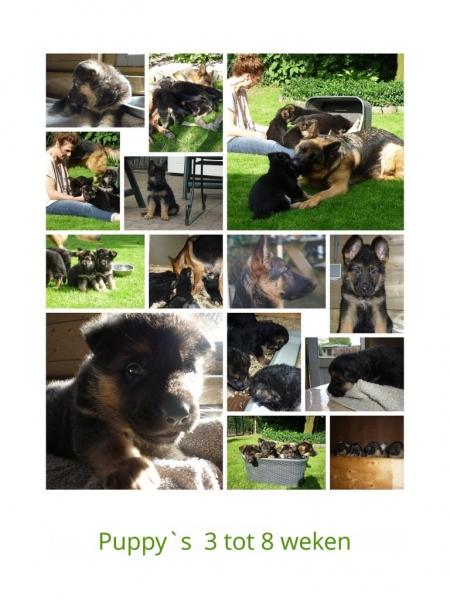 puppy-collage-768x1024